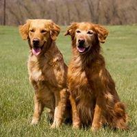 Golden Paws Dog Training LLC