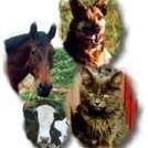 Valley View Veterinary Clinic - Twin Falls, Idaho