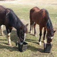 Samira Farm Horse Rescue
