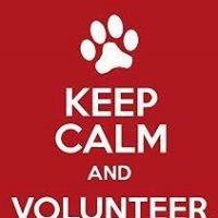 Davidson County Animal Shelter Volunteers