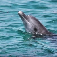 KWS Kisite Mpunguti Marine Park and Reserve