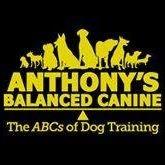 AB Canine Training