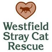 Westfield Stray Cat Rescue