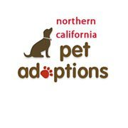 Northern California Pet Adoptions