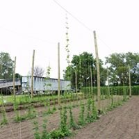 Miller Farms Hop Yard featuring Hops by Pops