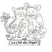 La Cité des Anges :  refuge pour petits animaux