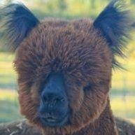 Humming Star Alpacas