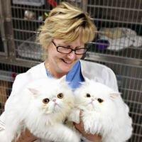 All Pets Veterinary Medical Center