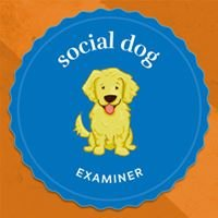 Social Dog Show