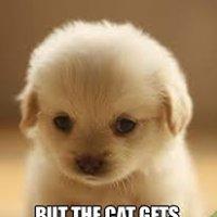 Perfect Pup Pet Training
