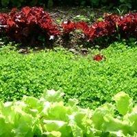 Miolea Organic Farm