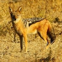Sentinel Limpopo Eco Safaris