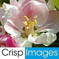 Crisp Images