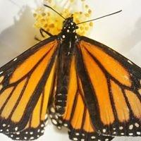 Brightwings butterflies
