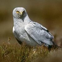 Renfrewshire RSPB Local Group