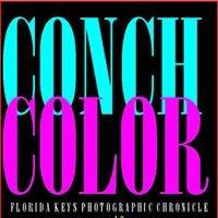 Conch Color