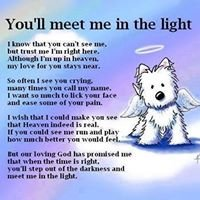 Remembering Furry Friends