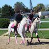 Amazing Grace Equestrian Center