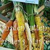 Gnadenhutten Farmer's Market