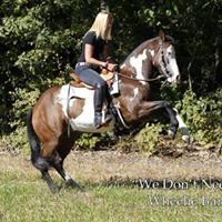 Tara Jones Training and Riding Tips