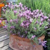 BIN Garden. fiori piante e agricoltura