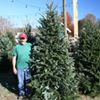 Village Green's Christmas Tree Lot