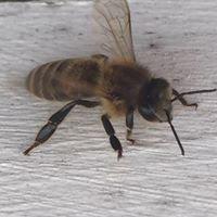 Sipes Busy Bee Farm