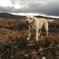 Dingwall Dog Walking Services