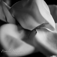 PJ Nelligan Photography