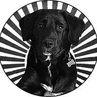 Blackdog Solutions