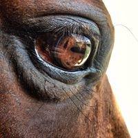 Tuscarora Equestrian