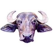 Ithaca Water Buffalo