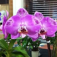 Campbelltown Orchid Society