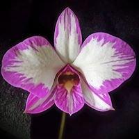 Central NY Orchid Society