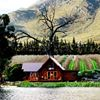 Arum Lily Cottage and Log Cabins
