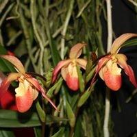 Blue Ridge Orchid Society