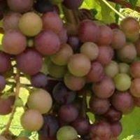 Palmetto Pickup Wines
