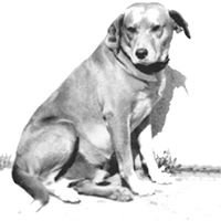 Brownie the Town Dog Grave & Memorial