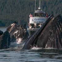 Juneau Tours and Whale Watch