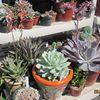 Brillante Succulents