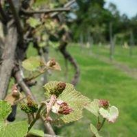 Enoree River Winery LLC