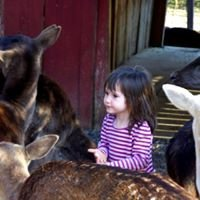 Smoky Mountain Deer Farm and Exotic Petting Zoo & Deer Farm Riding Stables
