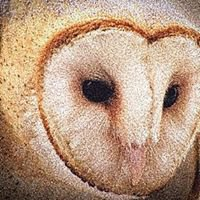 Barn Owl Trading Co