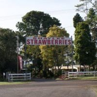Shaylee Strawberry Farm - Atherton Tablelands