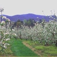 Panorama Orchards