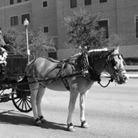 A Piece of History LLC - horse & carriage company