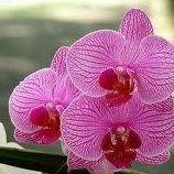 L'Orchidée Sauvage Fleurs