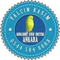 Muhabbet Kuşu Üretimi Ankara