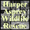 Harper Asprey Wildlife Rescue