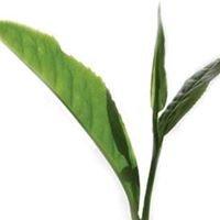 Herbal Teas and Tonics